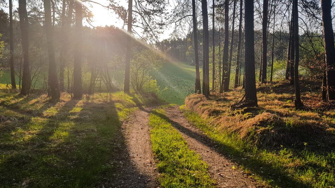Wunderschöne Sonnenstrahlen am Morgen